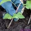 Черенки растений. Апрель