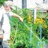 Бордоская жидкость против вредителей сада. Апрель