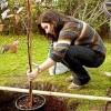 Посадка плодовых деревьев и кустарников. Апрель