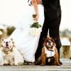 Домашние питомцы на свадьбе