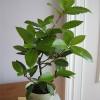 Экзотические комнатные растения