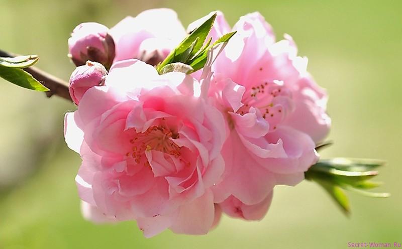 Весна май цветы