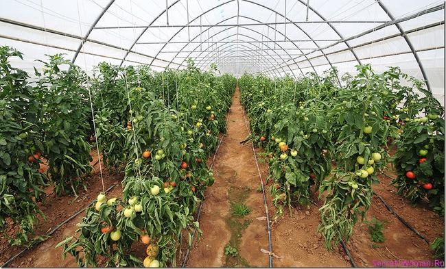Ценные культуры для выращивания 70