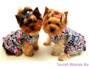 Памперсы для собак