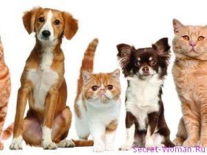 Домашние животные в семье