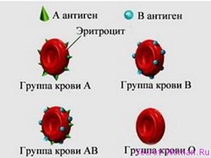 Антигены системы резус